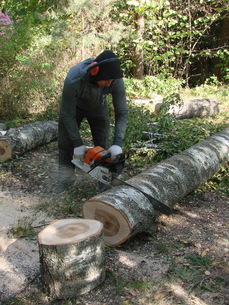 Распиловка березы на дрова