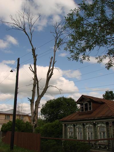 Удаление деревьев частями. Засохшее дерево над проводами.