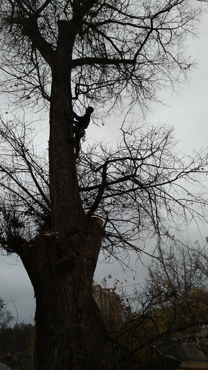 Удаление деревьев Московская область