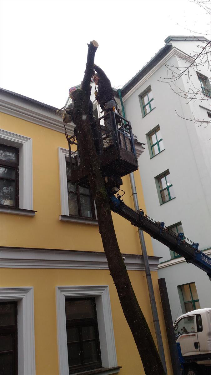 Удаление деревьев в ЦМШ