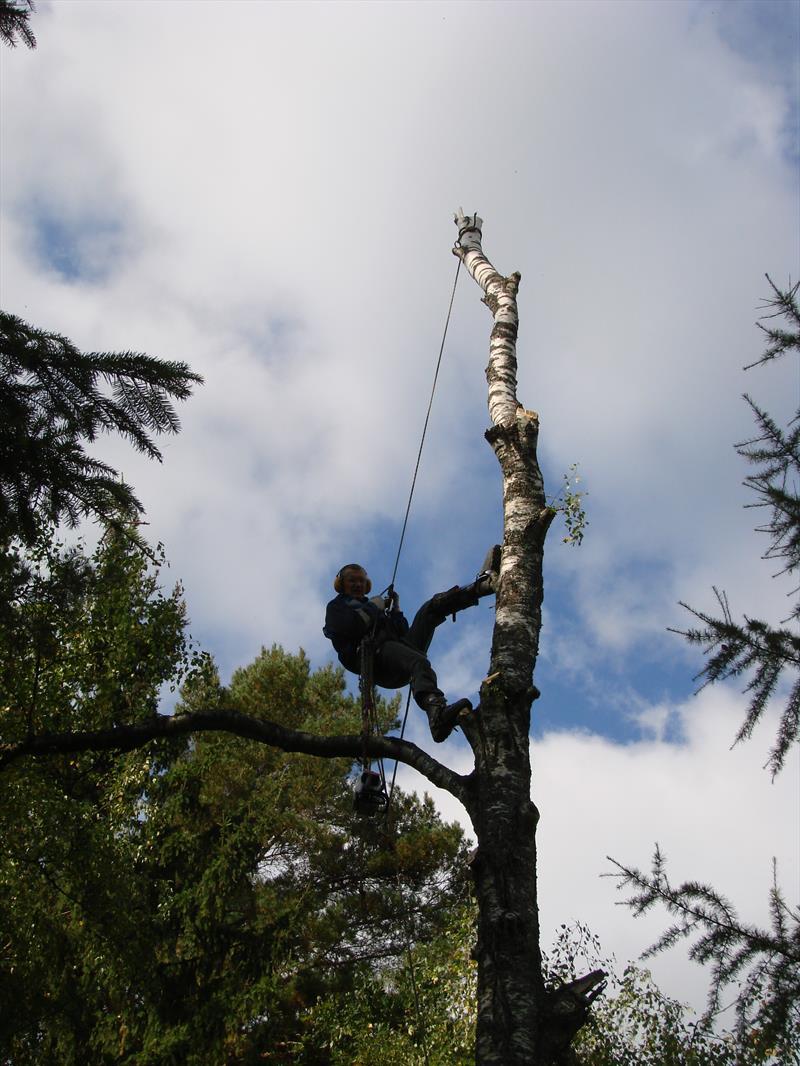 Удаление деревьев. Спуск альпиниста с дерева
