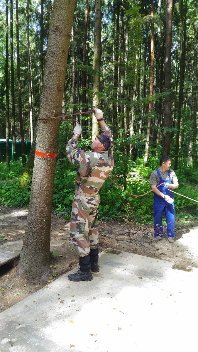 Натягивание палиспаста для удаления дерева