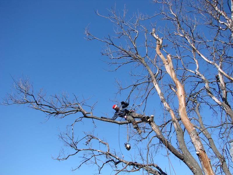 Спиливание дерева по частям с вывешиванием