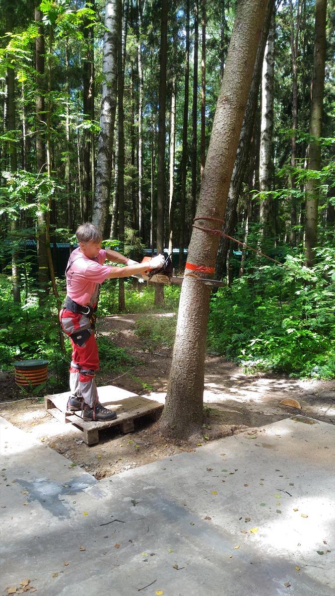 Альпинист спиливает дерево