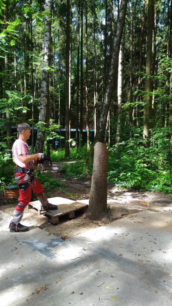 Удаление дерева с вывешиванием на соседних деревьях