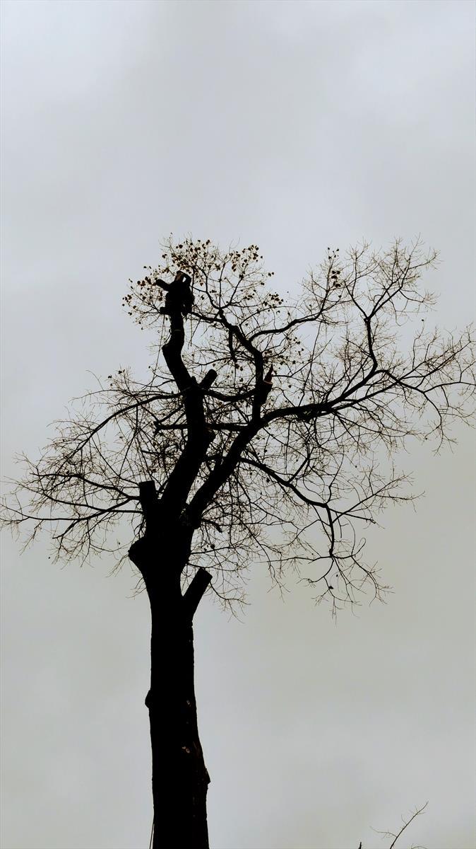 Удаление деревьев Подмосковье