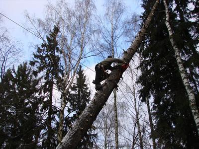 Промышленный альпинист поднимается по наклонному дереву